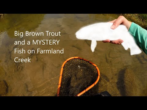 BIG BROWN TROUT And A MYSTERY Fish On A Farmland Creek!!!!