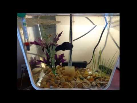 Aqua farm ecosphere hydroponic garden 3 gal square fish for Fish tank hydroponic system
