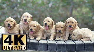 Cutest Dogs 4K UltraHD Slideshow 2018 screenshot 2