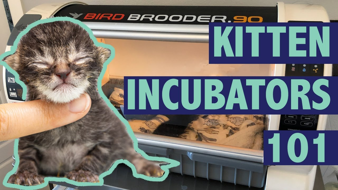 Keeping Kittens Warm With Incubators Youtube