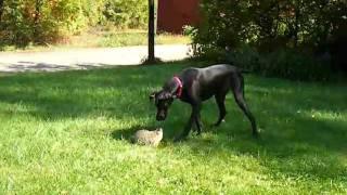 Bailey The Woodchuck Slayer