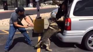 Protection Dog Training Utah- 801-895-2731