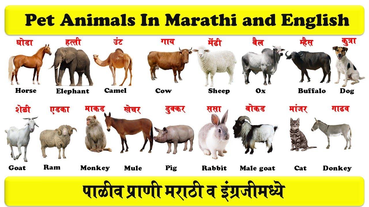 Small animal terminology