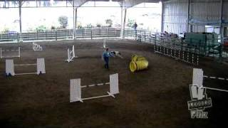 Whisper Excellent Jumpers Run Border Terrier Club Jan 16 2011