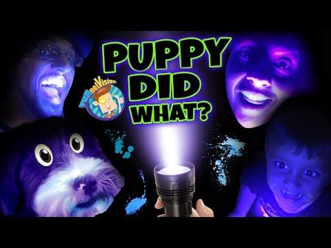 PET LIGHT DETECTOR?? Puppy in Trouble! (FUNnel V Fam Vlog)