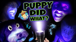PET LIGHT DETECTOR?? Puppy in Trouble! (FUNnel V Fam Vlog)