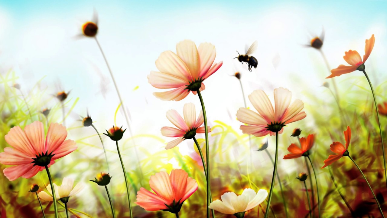 Beautiful flowers in nature relaxing music top 15 youtube beautiful flowers in nature relaxing music top 15 izmirmasajfo