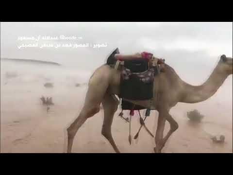 فيديو مذهل لجمال تسير وسط المياه في الصحراء السعودية      #بي_بي_سي_ترندينغ  - 17:55-2018 / 11 / 15