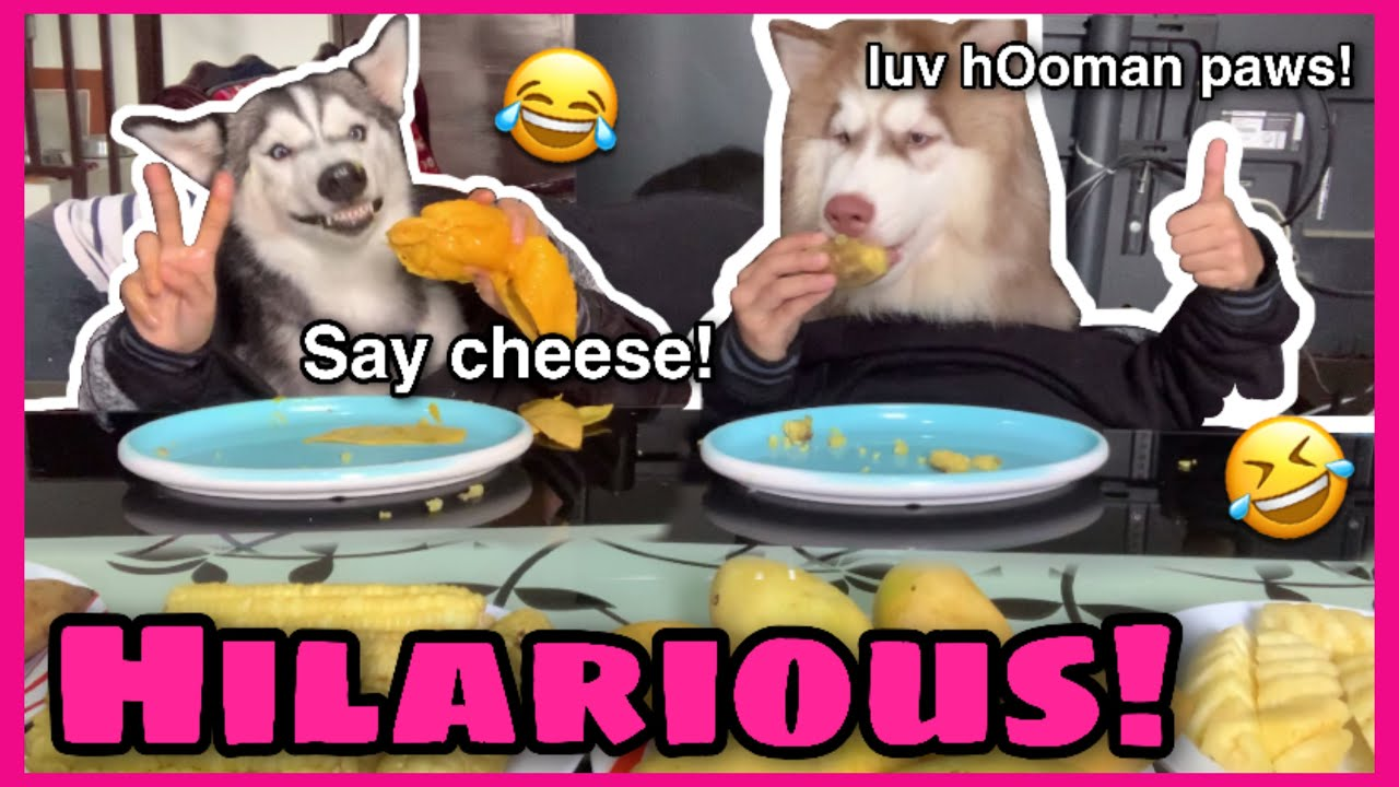 Not My Hands Challenge On My Siberian Huskies | Quarantine Edition | They Loved It! | Husky Pack TV