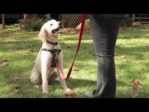 How to Choose the Best Harness for Your Dog