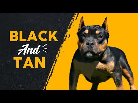 Top 10 Black & Tan Dog Breeds