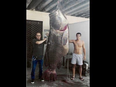 I pesci di mare piu 39 grandi del mondo youtube - Pesci piu comuni in tavola ...