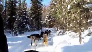 オーロラを見にアラスカへ 折角だから犬ぞりも体験.