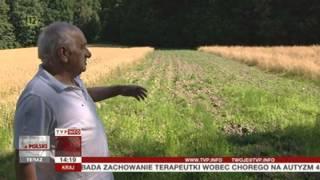 Opolszczyzna: dzik jest dziki, dzik jest zły (Raport z Polski TVP Info, 09.08.2013 r.)