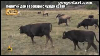 Какво ще прави партия ГЕРБ по случая с политика, който дои европари с чужди крави?