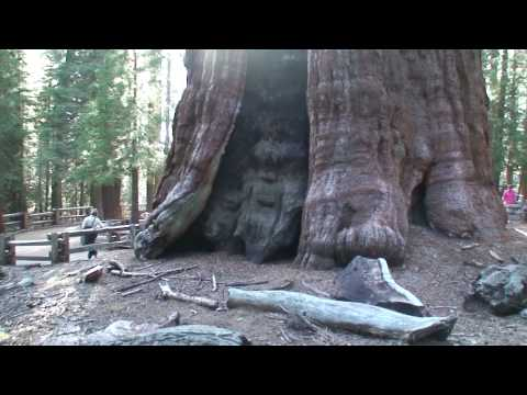 Biggest Tree on Earth HD - The General Sherman Tree.. Sequoia National Park