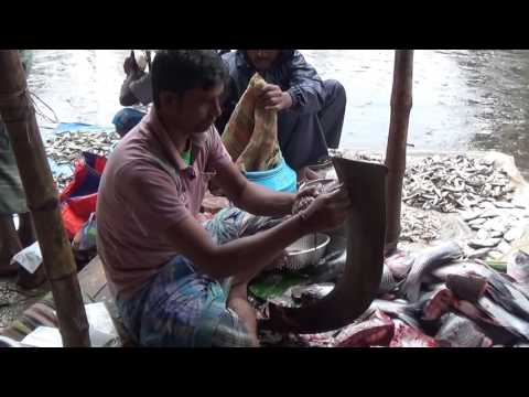 Fresh Fish Market - Awesome Scaling & Cutting Skill | Kolkata, Bangla, India