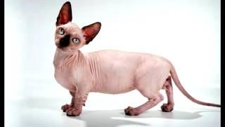Порода кошек. Удивительная порода