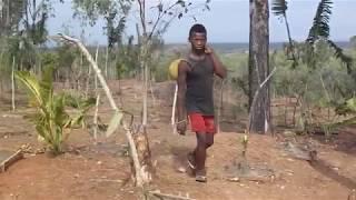 Новая система посадки черенков для опекунов ванили