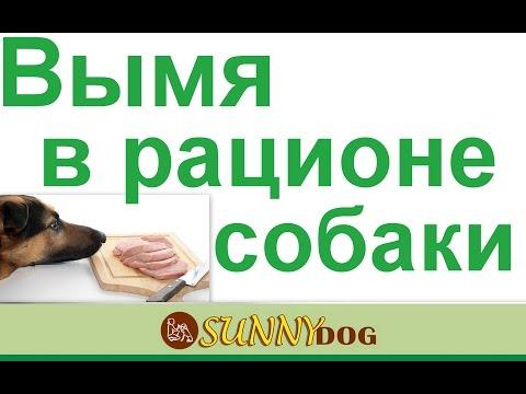 Как лечить собаку #советыветеринара #лечениесобакииз YouTube · С высокой четкостью · Длительность: 7 мин31 с  · Просмотры: более 12000 · отправлено: 06.05.2016 · кем отправлено: Про собак