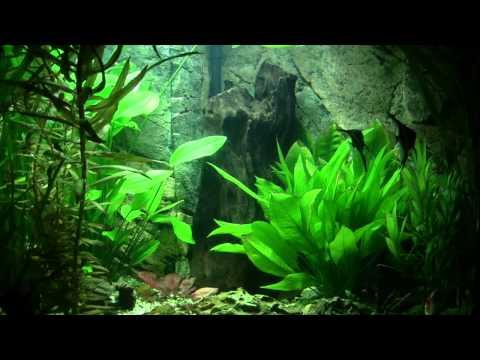 Aquarium Aufbau + Fischis