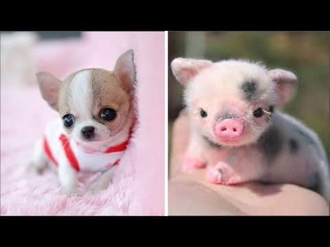 AWW CUTE BABY ANIMALS Videos Compilation cutest moment of the animals  Soo Cute! #33