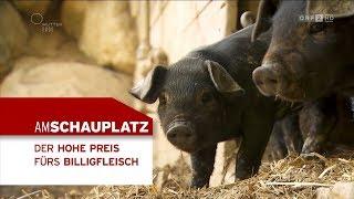 Der Preis fürs Billigfleisch  | Am Schauplatz