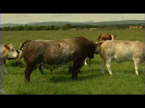 Animal Health, Cattle health planning, part 2