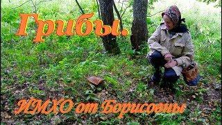 Грибы. Как правильно их собирать. ИМХО от Борисовны. Часть 1.