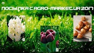 Посылка с AGRO-MARKET.UA Луковицы тюльпанов
