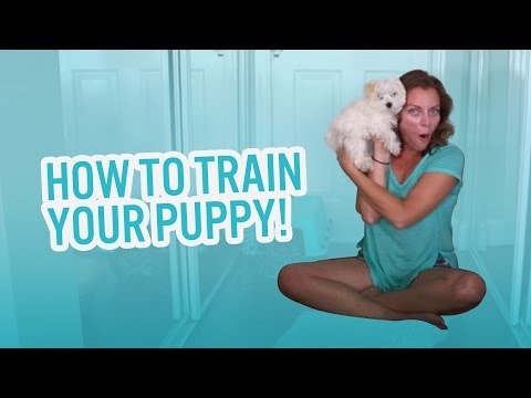 How to Train Your Puppy! | The Martins
