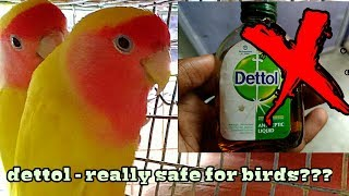 Be aware of dettol spray on budgies(in Hindi /Urdu and English)