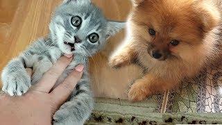 Котенок Макс VS щенок Алиса. РЕАКЦИЯ СОБАКИ НА КОТА