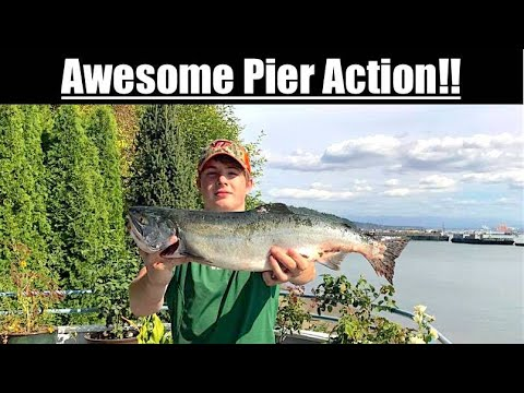 Pink Salmon Fishing in the Puget Sound