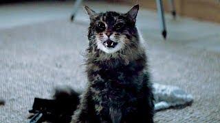 Кладбище домашних животных – Русский трейлер