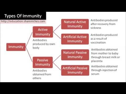 Diagram | Types of Immunity - Active Immunity, Passive Immunity ...