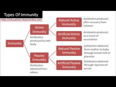 Types of immunity | bioninja.