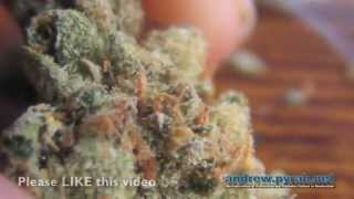 Amnesia Haze Wake and Bake - Amsterdam Weed Review