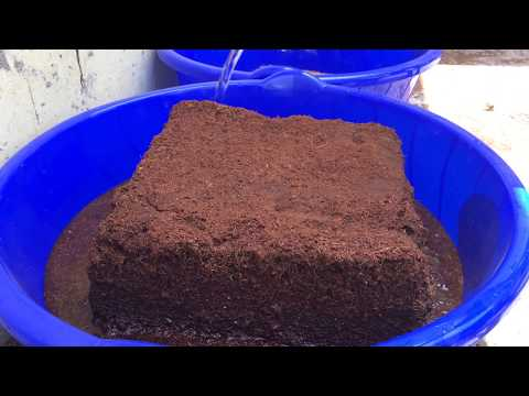 Coco peat expansion testing - Earth Sense Kokonut Compressed Coco peat expanded upto 17L/kg