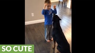 Rottweiler training with 4-year-old boy