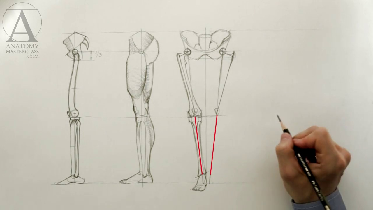 Lower Limb Anatomy - Anatomy Master Class for figurative artists ...