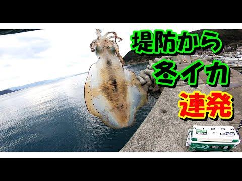 【劇的】堤防から良型連発!!冬エギングでキロアップ!!!