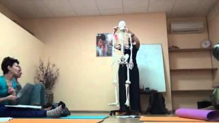 видео Мышцы синергисты