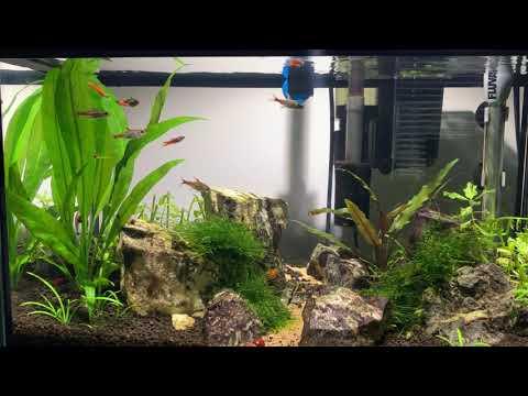 10 Gallon Planted Tank Low Tech Setup Stocking Ideas