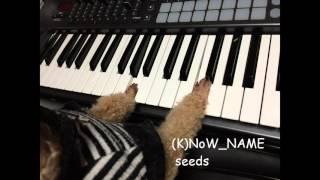 (K)NoW_NAME / seeds  [piano accompaniment]