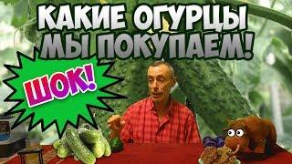 ШОК! КАКИЕ ОГУРЦЫ МЫ ПОКУПАЕМ! Виталий Островский. Повышенный билирубин, приливы, сезон орехов. Video