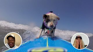 Sharks, Surfing Dogs And Party Waves  | Athletes React