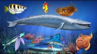 Морские животные   познавательное видео для детей  Жители моря и океана