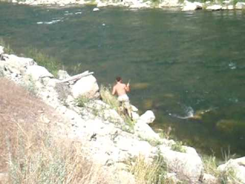 Sight Fishing For Brown Trout In Wind River Canyon