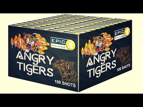 Angry Tigers 100